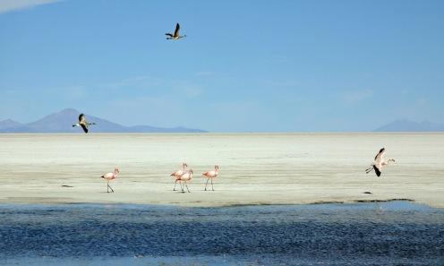 2009 Bolivie (228)